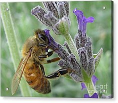 Pollen Catcher Acrylic Print by Tina Marie