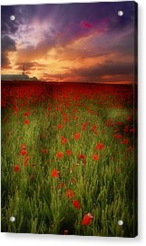 Acrylic Print featuring the photograph Poppies At Dusk by John Chivers