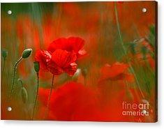 Poppy Flowers 02 Acrylic Print
