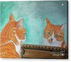 Pretty Kitty Acrylic Print by Teresa Vecere