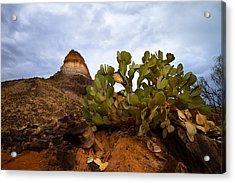Prickly Pear Acrylic Print
