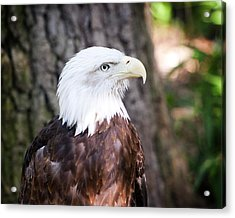 Proud Eagle Acrylic Print by Tammy Smith