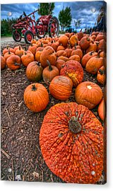 Pumpkins Acrylic Print by Mike Horvath
