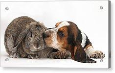 Puppy And Rabbt Acrylic Print