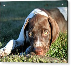 Puppy Eyes Acrylic Print by Brook Burling