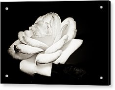 Acrylic Print featuring the photograph Pure Beauty by Sara Frank