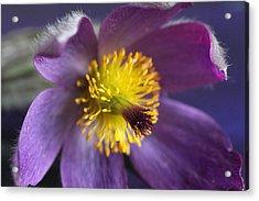 Purple Flower Acrylic Print by Mark J Seefeldt