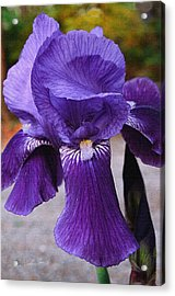 Acrylic Print featuring the photograph Purple Iris by Robert Kernodle