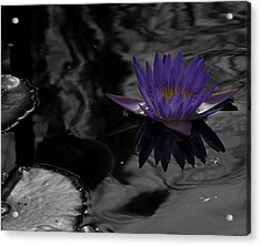 Purple Lilly In A Pond Acrylic Print