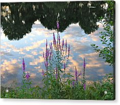 Acrylic Print featuring the photograph Purple Loosestrife by Mary McAvoy