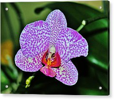 Acrylic Print featuring the photograph Purple Orchid by Sherman Perry
