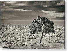 Pyramid Lake, Nevada, Usa Acrylic Print by Mel Curtis