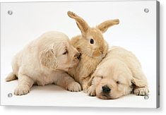 Rabbit And Puppies Acrylic Print by Jane Burton