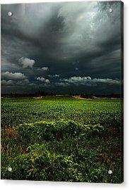 Rain Acrylic Print by Phil Koch
