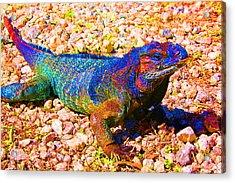 Rainbow Lizard Acrylic Print by Katheryn Napier