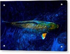Rar Fish Acrylic Print