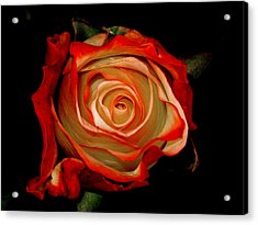 Red Acrylic Print by Monika A Leon