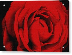 Red Rose Acrylic Print by Robert Kernodle