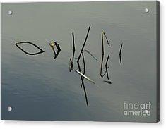 Reflection Acrylic Print by Odon Czintos