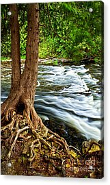 River Through Woods Acrylic Print by Elena Elisseeva