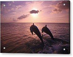 Roatan, Bay Islands, Honduras Two Acrylic Print by Stuart Westmorland