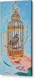 Robin Bird Acrylic Print by Robin Birrell