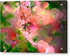 Rose 142 Acrylic Print by Pamela Cooper