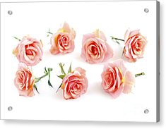 Rose Blossoms Acrylic Print by Elena Elisseeva