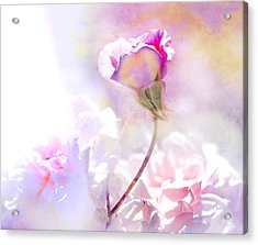 Rose By Any Other Name Acrylic Print by Jeff Burgess