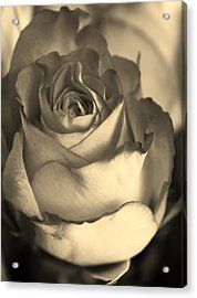 Rose In Sepia Acrylic Print by Bruce Bley