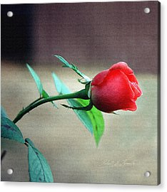Acrylic Print featuring the pyrography Rosebud by Robert Kernodle