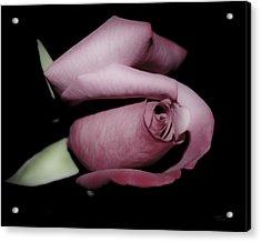 Rosebud Acrylic Print by Teresa Dixon