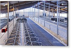 Row Of Cattle Cubicles Acrylic Print by Jaak Nilson