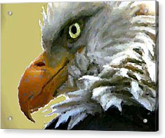Eagle Eye Acrylic Print by Carrie OBrien Sibley