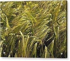 Rye Acrylic Print by Design Windmill