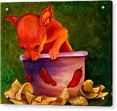 Salsa Chihuahua Acrylic Print by Gail Mcfarland