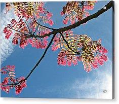 Santa Barbara California Fine Art Print Acrylic Print by Ian Stevenson