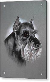 Schnauzer Acrylic Print by Patricia Ivy
