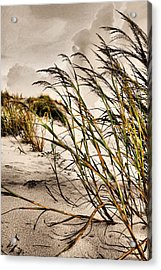 Sea Oats Acrylic Print by Kristin Elmquist