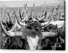 Sea Of Horns Acrylic Print by Megan Chambers