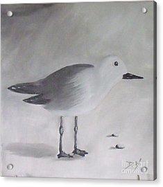 Seagull Acrylic Print by Debra Piro