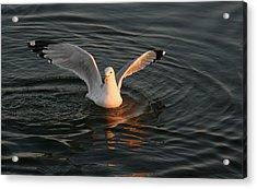 Seagulls At Sunset Acrylic Print by Valia Bradshaw