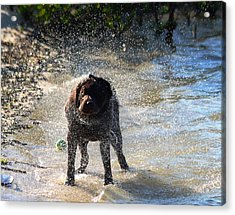 Acrylic Print featuring the photograph Shake Shake Shake by Jeanne Andrews