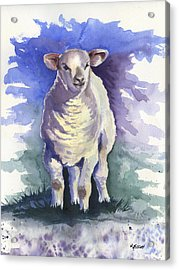 Shellies Lamb Acrylic Print