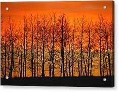 Silhouette Of Trees Against Sunset Acrylic Print