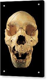 Skull 5, Sima De Los Huesos Acrylic Print by Javier Truebamsf
