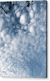 Acrylic Print featuring the photograph Sky Fluff by Lenny Carter