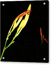 Sleeping Iris Acrylic Print by Todd Sherlock