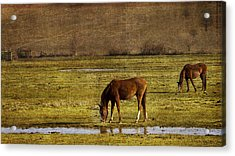 Snacking Acrylic Print by Rebecca Cozart