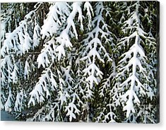 Snowy Fir Tree Acrylic Print by Sami Sarkis